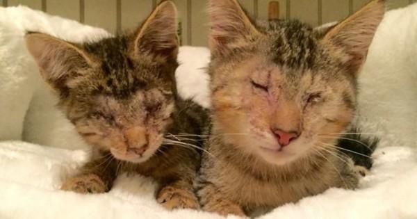 Όταν αυτά τα τυφλά γατάκια συναντούν αυτό το πίτμπουλ γίνεται κάτι απίστευτο (Εικόνες)