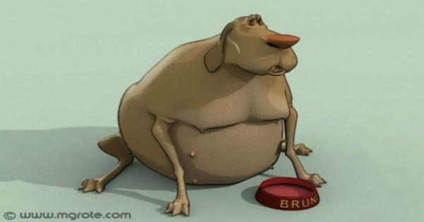 Τι ΔΕΝ πρέπει να τρώει ο σκύλος σας.