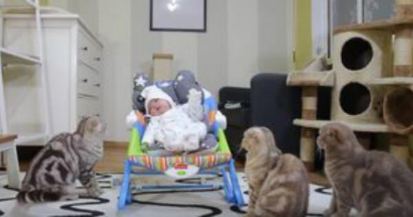 Ετοιμαστείτε για πολύ γέλιο: 5 γάτες συναντούν για πρώτη φορά τα μωρά των ιδιοκτητών τους! (Βίντεο)