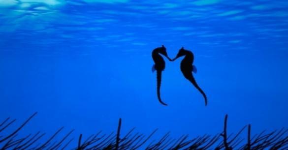 Ο ιππόκαμπος είναι το πιο ρομαντικό πλάσμα της φύσης. Εδώ θα δείτε γιατί … (Βίντεο)