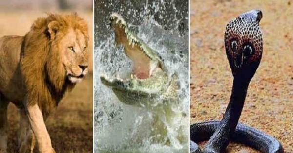 Επικές μάχες επιβίωσης στο ζωικό βασίλειο – Ανακόντα εναντίον λιονταριού κροκόδειλου και κόμπρας [βίντεο]