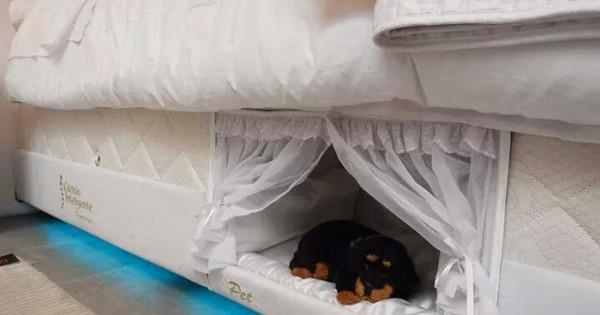 Το απόλυτο Κρεβάτι για να μπορείς να κοιμάσαι παρέα με το σκύλο σου. (Εικόνες)