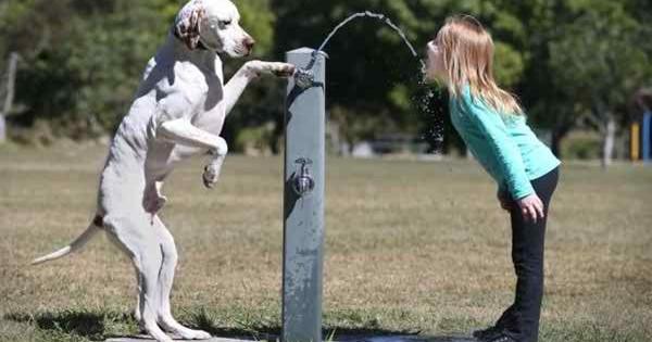 Όταν τα ζώα προσφέρουν απλόχερα ένα… πόδι βοήθειας (Εικόνες)