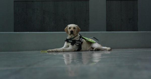 Αφανείς Ήρωες: Με τα μάτια δεμένα στην Αθήνα κι έναν Σκύλο για Οδηγό (Εικόνες)