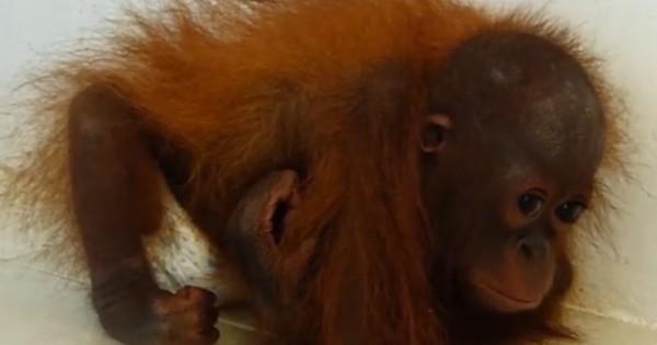 Αυτή είναι η συγκλονιστική εικόνα της ζωής των ζώων σε αιχμαλωσία (Εικόνες-Βίντεο)