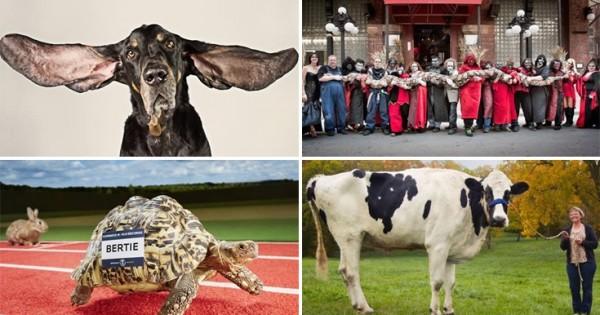 Δέκα παράξενα ρεκόρ ζώων (Βίντεο-Εικόνες)
