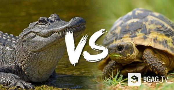 Κροκόδειλος VS Χελώνα: Η νίκη του κροκόδειλου είναι αναμενόμενη, αλλά η συνέχεια είναι αυτή που μετράει!
