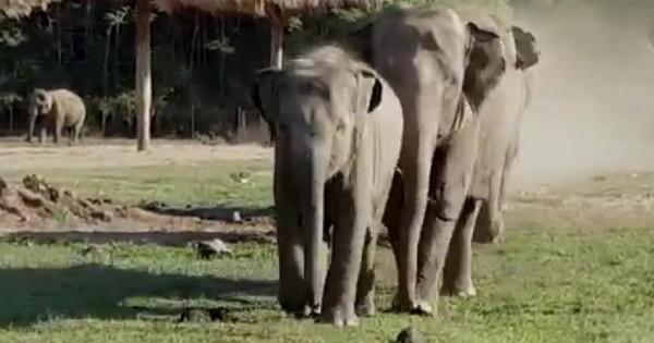 Κάθε πρωί ένα μωρό ελέφαντας τρέχει να υποδεχθεί αυτόν τον άντρα. Αυτή είναι αγάπη! (Βίντεο)