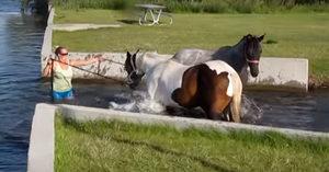 Πολύ όμορφη στιγμή: Άλογα παίζουν για πρώτη φορά με το νερό… (Βίντεο)
