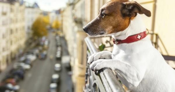 Σκύλος σε διαμέρισμα: Τι ορίζει τελικά η Ελληνική Νομοθεσία; (Ν.3170/2003)
