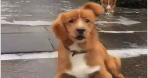 Ξεκαρδιστικό: Η αντίδραση του σκύλου όταν γλιστράει πάνω σε ολισθηρό δρόμο!