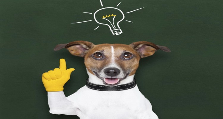 Είναι-έξυπνος-ο-σκύλος-750x400