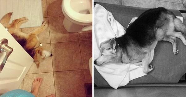 Αποχαιρέτησε τον σκύλο της με ένα συγκινητικό φωτογραφικό αφιέρωμα (Εικόνες)