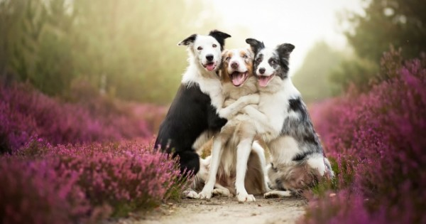 24 Χαρούμενοι Σκύλοι που θα σας Φτιάξουν τη Διάθεση! (Εικόνες)