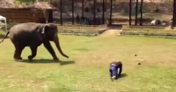 Αυτό που κάνει ο συγκεκριμένος ελέφαντας θα σας αφήσει άφωνους! (Βίντεο)