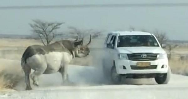 Αφηνιασμένος ρινόκερος επιτίθεται και σπάει τζιπ τουριστών [βίντεο & εικόνες]