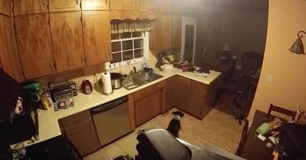 Όταν οι γονείς έφυγαν από το σπίτι, 30 δευτερόλεπτα αργότερα, ο σκύλος έδωσε ΡΕΣΙΤΑΛ! (Βίντεο)