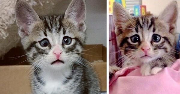 Το γατάκι που γεννήθηκε με τα συνεχώς ανήσυχα μάτια. (Εικόνες)