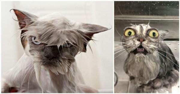 Τα έκαναν μούσκεμα: 15 αστείες εικόνες από γάτες που κάνουν μπάνιο!