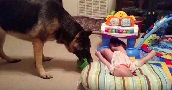 Η μητέρα άκουσε γέλια από το διπλανό δωμάτιο – Όταν είδε τι έκανε ο σκύλος της… Αξιολάτρευτο!