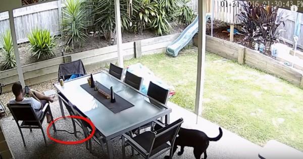 Αυτός είναι γενναίος σκύλος! Σώζει τον ιδιοκτήτη του από ένα από τα πιο θανατηφόρα φίδια στον κόσμο!
