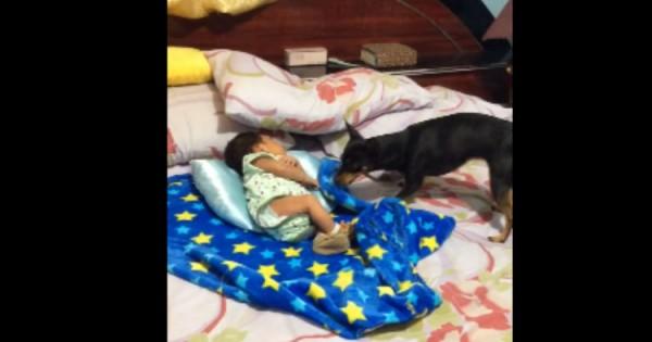 Φοβερό: Το Μωρό άρχισε να Κλαίει. Δείτε τώρα τι κάνει ο Σκύλος…