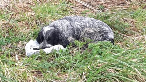Δεν υπάρχουν λόγια:  Η σπαρακτική εικόνα της σκυλίτσας που φυλούσε μια σακούλα με τα νεκρά κουτάβια της μέσα