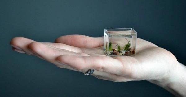 Δείτε τα λιλιπούτεια ψάρια στο μικρότερο ενυδρείο του κόσμου!