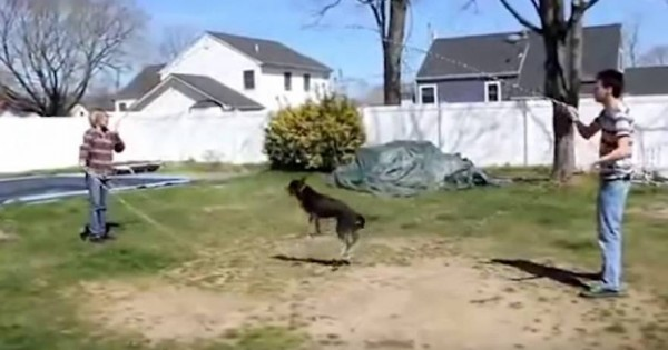 Βίντεο: Και τα ζώα έχουν ανθρώπινες συνήθειες!