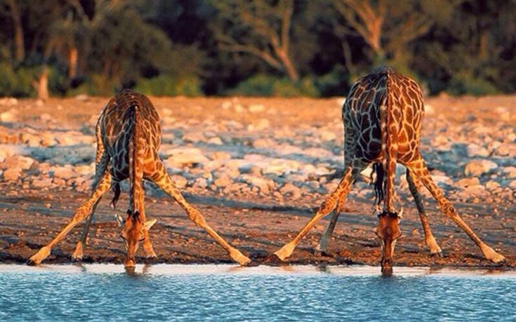 giraf01-735x459