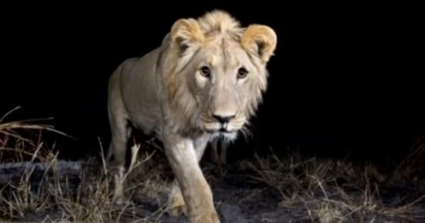Αυτά είναι τα πιο ντροπαλά ζώα της Αφρικής