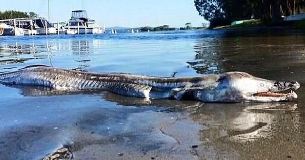 Μυστηριώδες θαλάσσιο πλάσμα που ξεβράστηκε σε λίμνη της Αυστραλίας