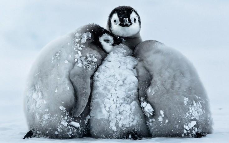 Πιγκουίνοι Ανταρκτική