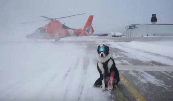 Σκύλος σκι