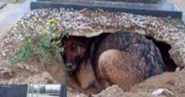 Συγκινητική ιστορία: Ο πιο πιστός σκύλος στον πλανήτη: Ζούσε σε λάκκο μέσα στο τάφο του αφεντικού του!