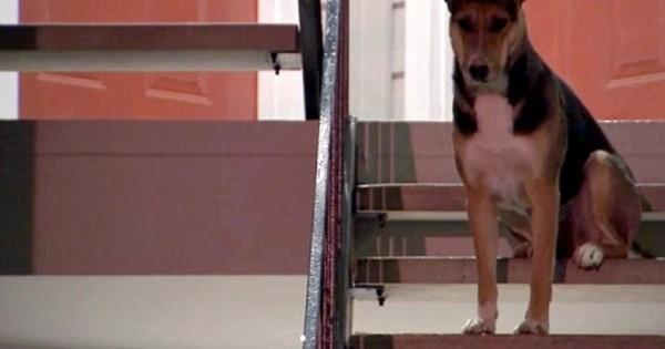Θα σας κάνει να δακρύσετε: Ο πιστός σκύλος που περιμένει μάταια το δολοφονημένο αφεντικό του