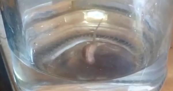 Προσοχή: Αυτό το παράξενο πλάσμα μπορεί να βγει από τη βρύση σας!