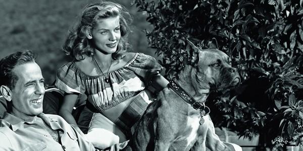 Πόσο λάθος μπορεί να μας επηρεάζει η τηλεόραση και ο κινηματογράφος στην επιλογή σκύλου (Εικόνες)