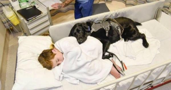 Το λαμπραντόρ που δεν εγκαταλείπει το 9χρονο αυτιστικό αγόρι ούτε στο κρεβάτι του νοσοκομείου. (Εικόνες)