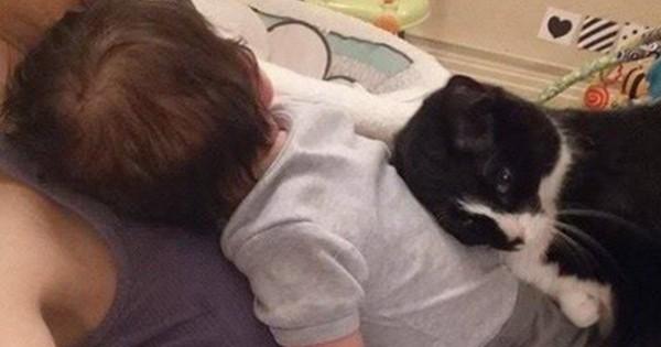 Η γάτα που είναι ο φύλακας-άγγελος αυτού του κοριτσιού (Εικόνες)