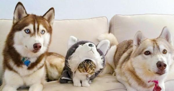 16 Ξεκαρδιστικές Φωτογραφίες με Γάτες που νομίζουν πως έχουν βρει την τέλεια Κρυψώνα! (Εικόνες)
