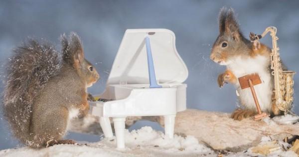 9 φανταστικές φωτογραφίες με σκιουράκια που «παίζουν» μικροσκοπικά όργανα