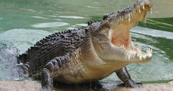 Τρόμος στο…νερό: Βρήκε στην πισίνα του κρυμμένο αλιγάτορα! – Δείτε το βίντεο