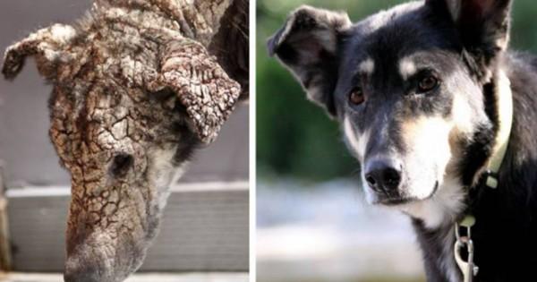 Η ιστορία της Πέτρας της σκυλίτσας που «άνθισε» από την αγάπη εκείνων που την έσωσαν… (βίντεο)