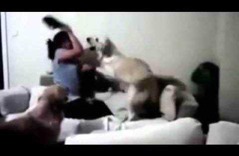 Σκυλιά προστατεύουν παιδί από ξυλοδαρμό (Βίντεο)