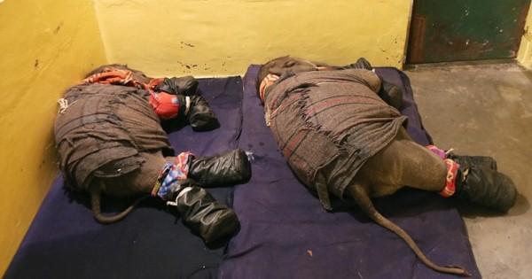 Πώς βάζεις δύο ελεφαντάκια για ύπνο (Εικόνες)