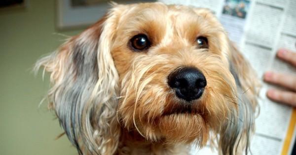 Γιατί ο σκύλος σας δε σταματάει να γαβγίζει και πώς να το διορθώσετε