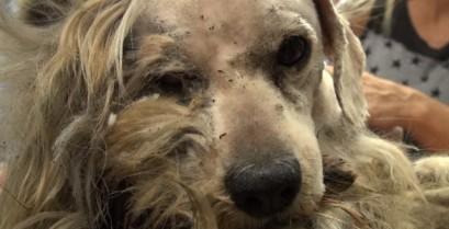 Αυτός ο σκύλος χρειαζόταν ένα καλό κούρεμα και πολλή αγάπη (Βίντεο)