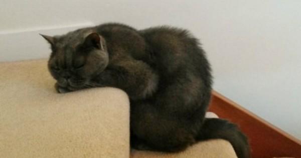 20 ζωάκια που αποφάσισαν πως θέλουν να κοιμηθούν όπου τους αρέσει! (Εικόνες)