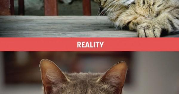 Ένας περήφανος ιδιοκτήτης γάτας: Οι προσδοκίες του απέναντι στην… «ωμή» πραγματικότητα (Εικόνες)